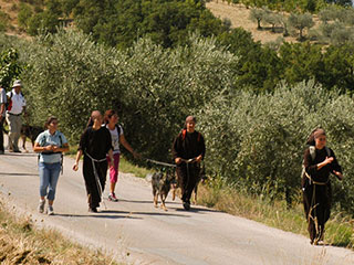 m pilgrims on track of Francesco pilgrimage
